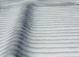 Snow Ribs.jpg