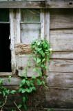 Tobago Window.jpg