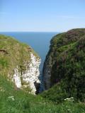 Bempton Cliffs RSPB reserve