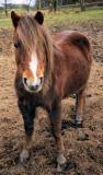 Hopeful Horse