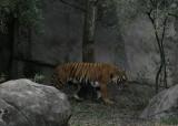 Zoo23.jpg