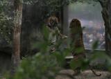 Zoo24.jpg
