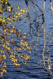 Plongée visuelle sur l'étang