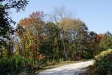 allée forestière dégagée