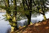 En bordure d'étang
