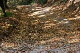 Les feuilles mortes se r.........