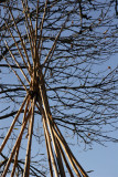 Tipi and tree