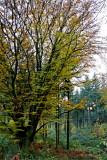 Fin du jour en forêt