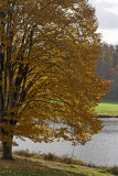 Autumnal story in Limousin (five)