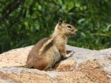 Zoom shot of squirrel at Flagstaff Arboretum