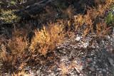 Unknown plant - pretty fall color