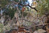 Unusual agave