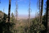 View looking toward Globe