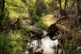 Riparian area along Queen Creek is very lush in this photo
