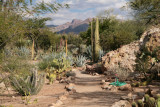 In the Cactus Garden