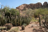 Senita cactus in the Cactus Garden