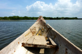 Boat trip to the mangrove woods