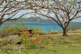 La Martinique,  l'île aux Fleurs