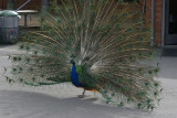woodland_park_zoo