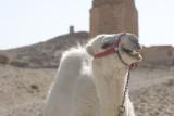 Palmyra apr 2009 0011b.jpg