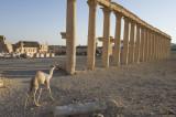 Palmyra apr 2009 0096.jpg