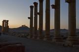 Palmyra apr 2009 0153.jpg