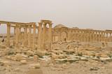 Palmyra apr 2009 0175.jpg