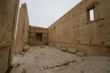 Palmyra apr 2009 0273.jpg