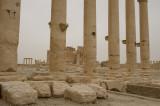 Palmyra apr 2009 0296.jpg