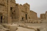 Palmyra apr 2009 0302.jpg