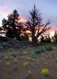 oregon sunshine / sunset