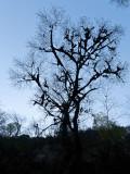 Contraluz de árbol con musgo