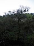 El mismo árbol
