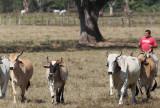 Samara ranch work.jpg