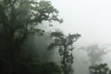 Cloud Forest -  Del Toro.jpg