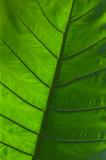Flora XII.jpg