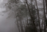 Cloud Forest III.jpg