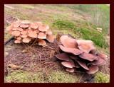 Fungi-2.jpg