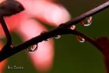 Backlight droplets...
