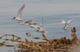 Oiseaux 05.jpg