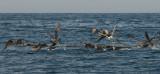 Oiseaux 10.jpg