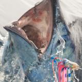 Marlin 21.jpg
