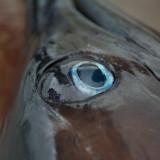 Marlin 64.jpg