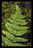 fern leaf on moss