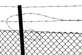 Barbed wire #1