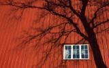 Small window - big tree