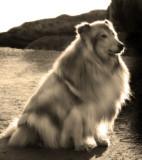 Lassie at sunset.. :  )