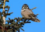 2010 Bird Photos