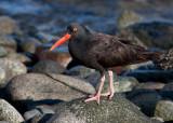 Bird Photography Trips