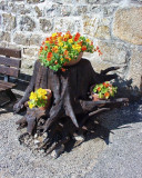 Flowers in Boucieu-le-Roi